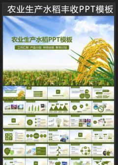 2016农业生产稻花香水稻丰收PPT模板