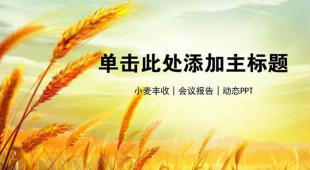 农业稻谷丰收喜悦PPT模板