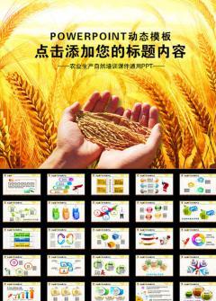 农业丰收稻谷收获通用农副产品PPT模板