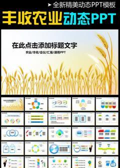 农业水稻种子耕种丰收秋天粮食PPT模板