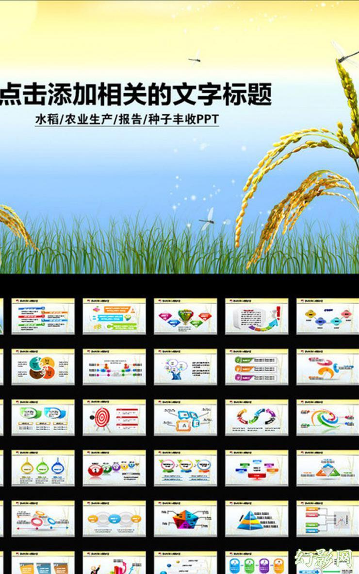 农业生产水稻丰收宣传PPT模板