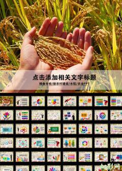 粮食稻谷丰收农业生产PPT模板