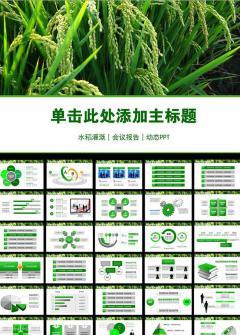 农业生产水稻会议报告通用PPT模板